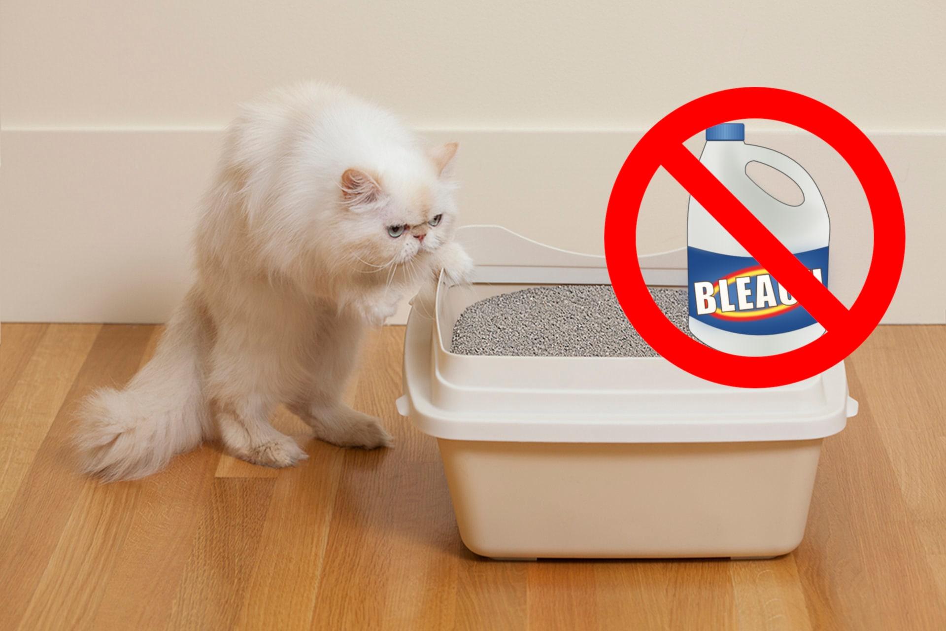 Cat Bleach Harmful