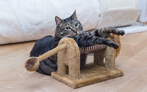 Cat And Scratch Toy