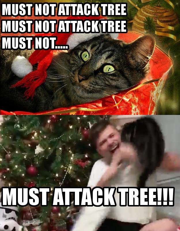 Cat Memes - Purrfect Love