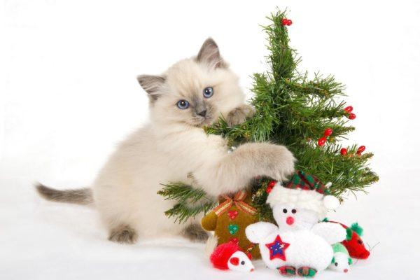 Cat Christmas Decorations