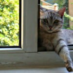 Will a Cat Jump Out an Open Window?