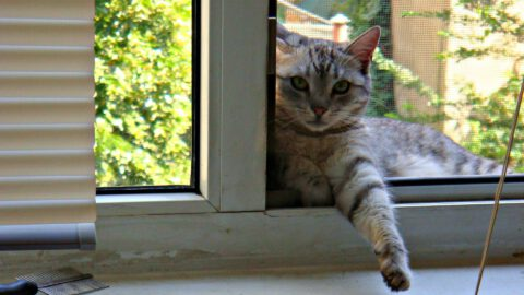 Will a Cat Jump Out an Open Window?