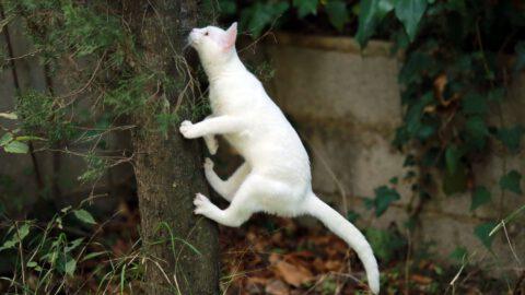 Cat Spraying vs Urinating