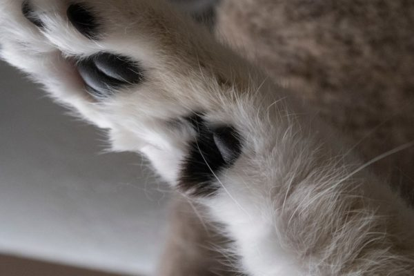 Why Do Cats Have Arm Whiskers?