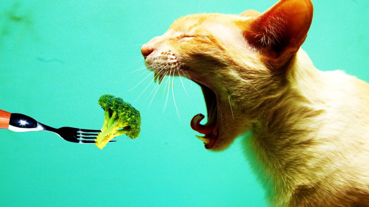 Can Cats Be Vegan or Vegetarian?
