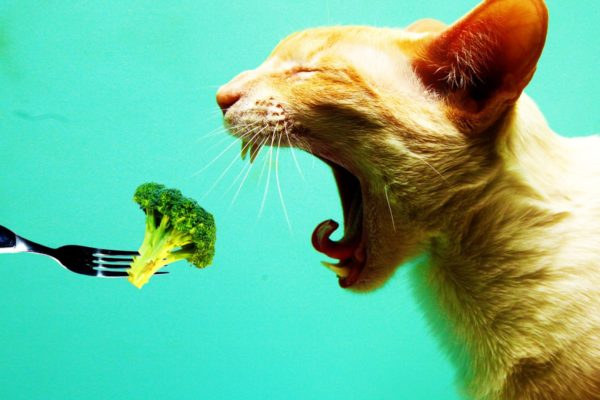 Can Cats Be Vegan or Vegetarian?