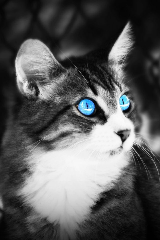 Mobile Cat Wallpapers Android Iphone Smartphone Hd Wallpapers Purrfect Love