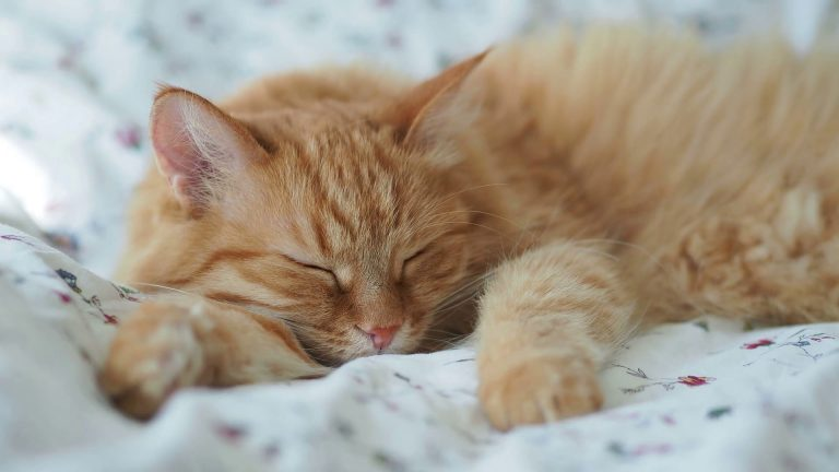 Will Cats Eat Bed Bugs?