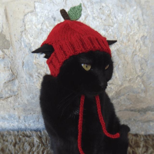 Apple Cat Hat