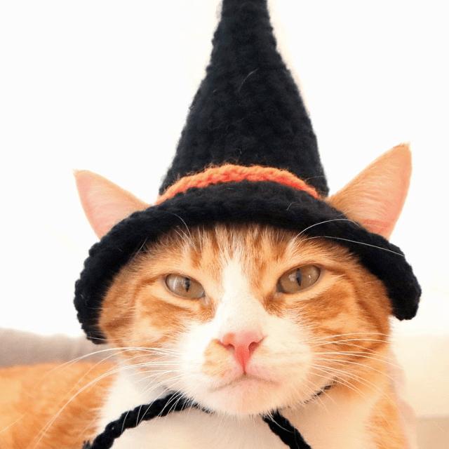 Black And Orange Witch Cat Hat