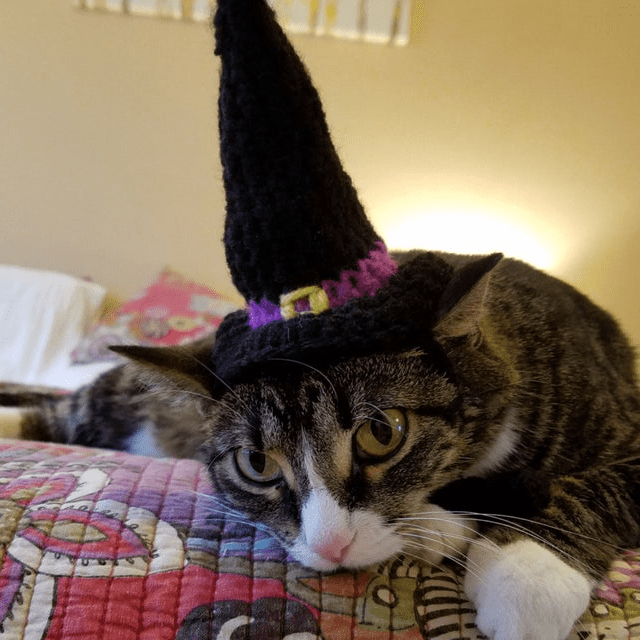 Black Witch Cat Hat