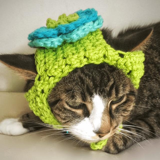 Blue Flower Cat Hat