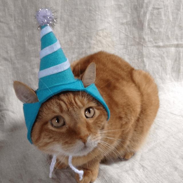 Blue Party Hat Cat Hat