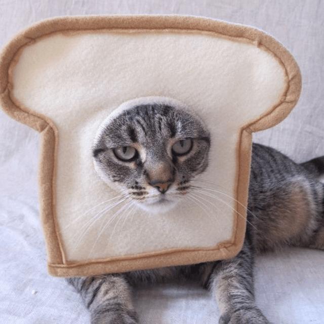 Bread Head Cat Hat