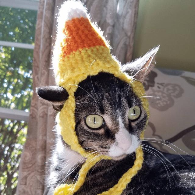 Candy Corn Cat Hat