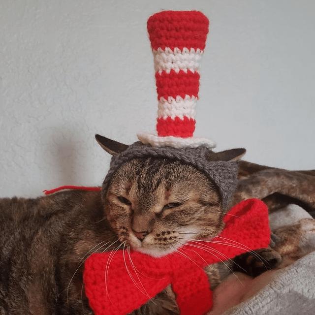 Cat in the Hat Cat Hat