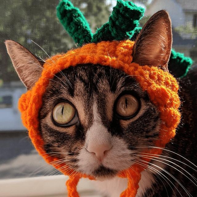 Cute Pumpkin Cat Hat