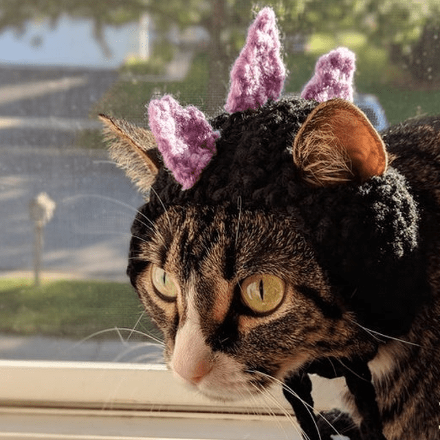 Dinosaur Cat Hat