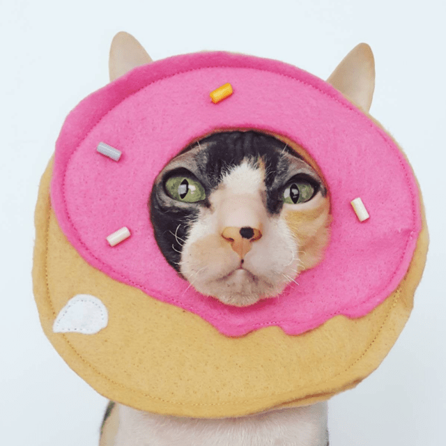Donut Face Cat Hat