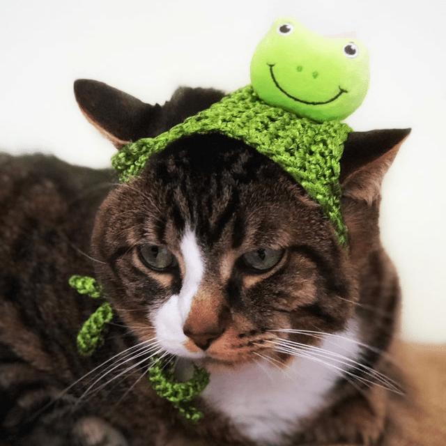 Emoji Frog Cat Hat