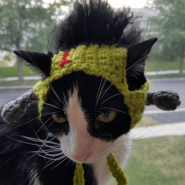 Frankenstein Cat Hat