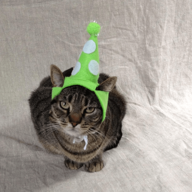 Green Party Hat Cat Hat