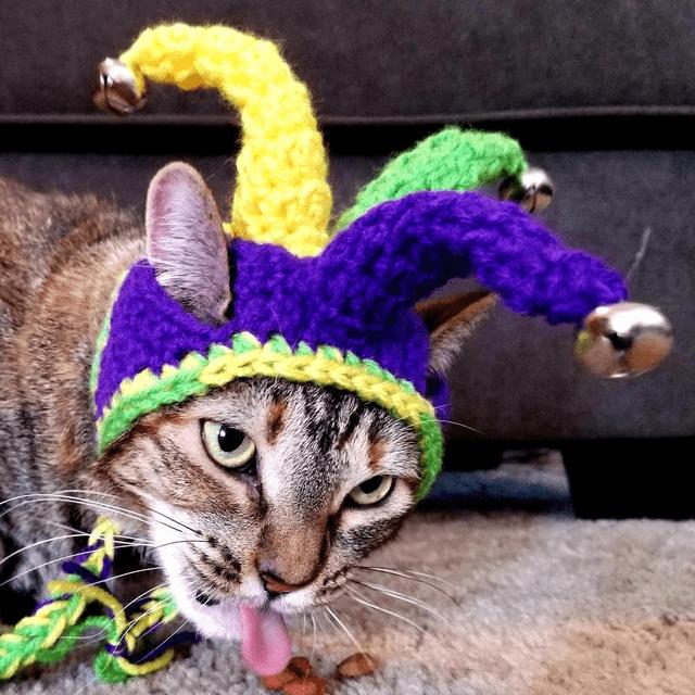 Jester Cat Hat