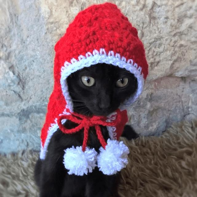Little Red Riding Hood Cat