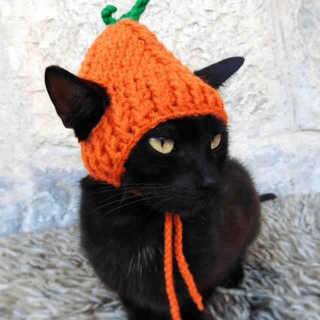Orange Pumpkin Cat Hat