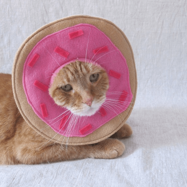 Pink Donut Face Cat Hat
