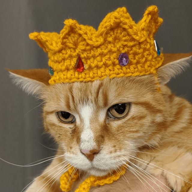 Royal Crown Cat Hat