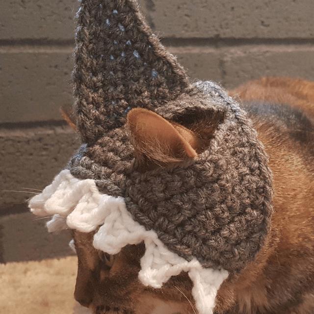 Shark Cat Hat