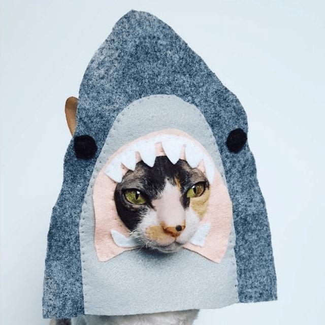 Shark Face Cat Hat