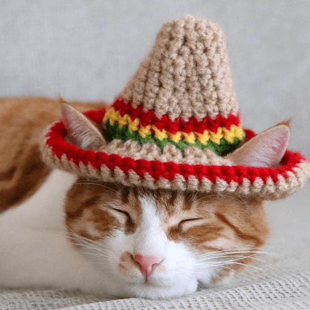 Sombrero Cat Hat