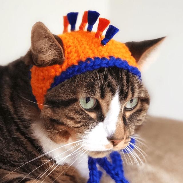 Sports Team Cat Hat