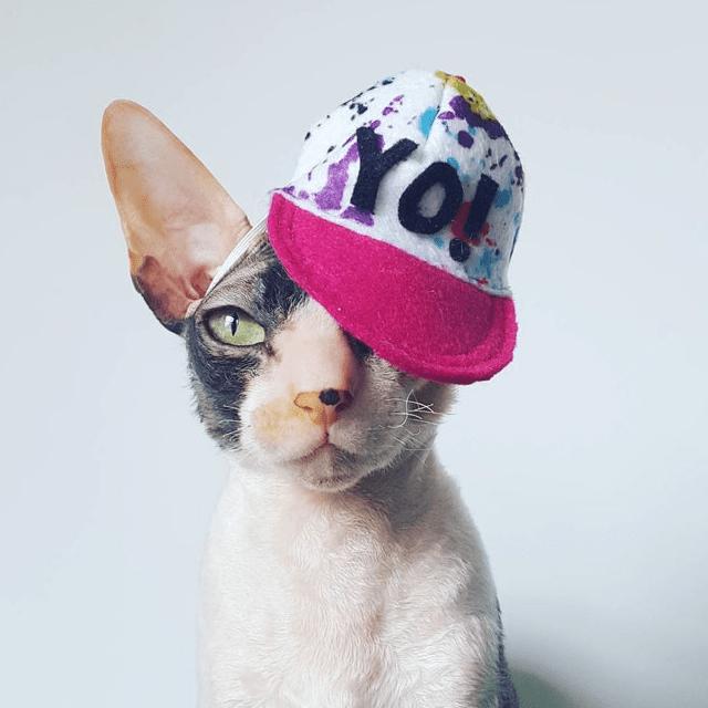 Street Wear Cat Hat