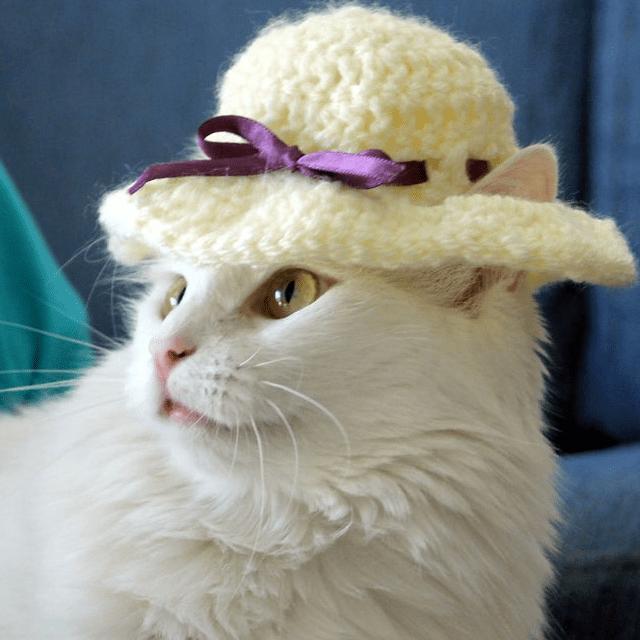 Sun Hat Cat Hat