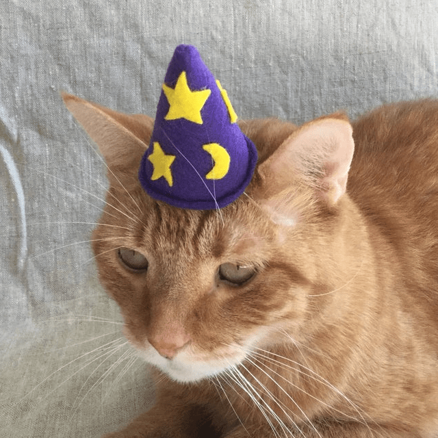 84 Adorable Halloween Hats for Cats , Purrfect Love