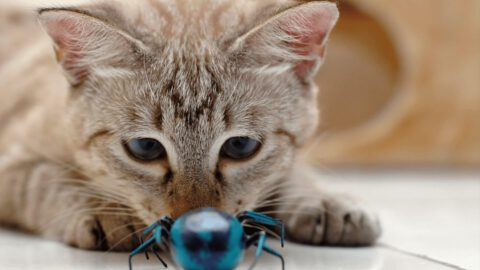 5 Bugs That Can Give Your Cat Parasites