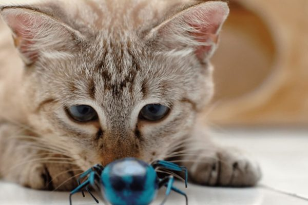 Cat With Bug