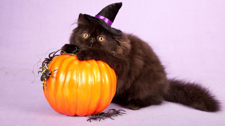 84 Adorable Halloween Hats for Cats