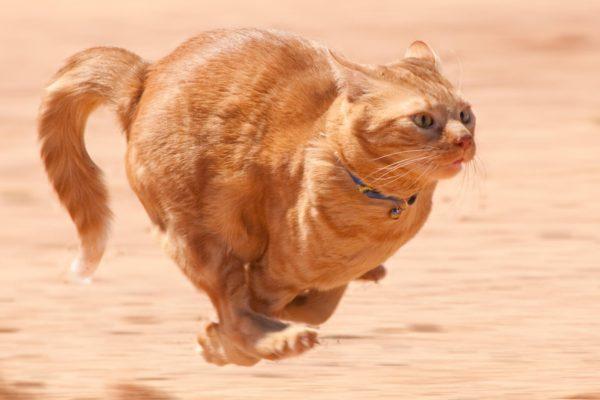 Hyper cat