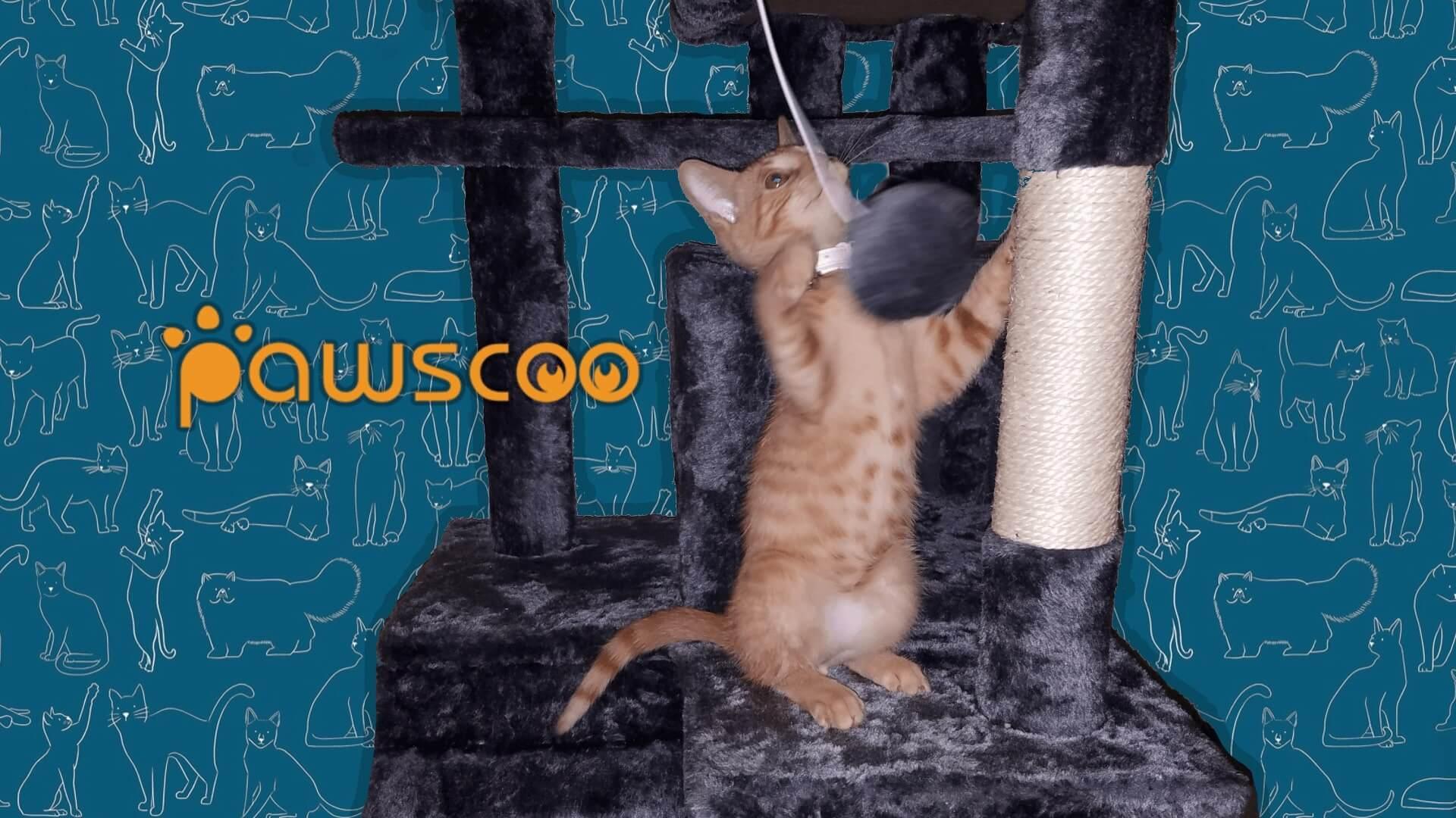 Pawscoo Cat Tree
