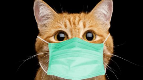 Can My Cat Catch the Coronavirus?