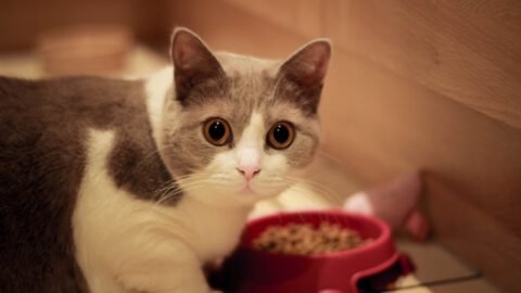 5 Beneficial Additions to Your Cat's Diet