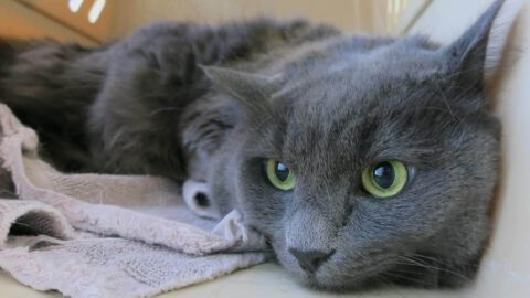 Symptoms of Stress in Cats
