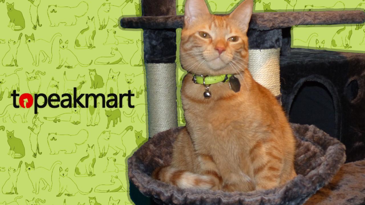 Topeakmart Cat Tree Review
