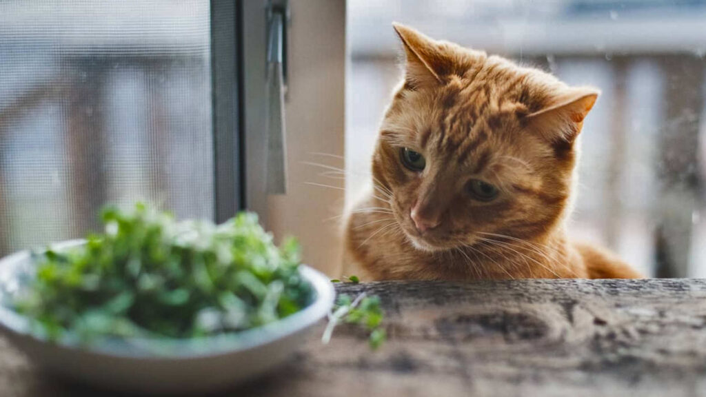 Cat looking at vegetables
