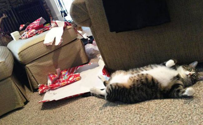 Cat opened all the gifts
