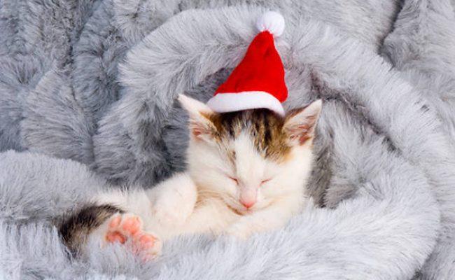 Kitten taking a nap santa hat
